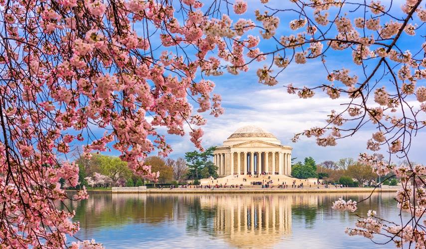 Washington DC pic on shadi®